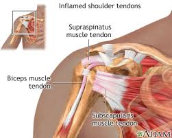 Shoulder And Arm Muscles Anatomy Rotator Cuff Problems Medlineplus Medical Encyclopedia