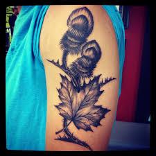 canadian maple leaf vincentius maximus