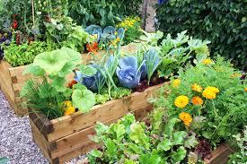 Small Kitchen Garden Ideas by Small Vegetable Garden Plan Ideas The Garden Inspirations