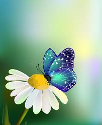 vector blue butterfly on the flower stock vector
