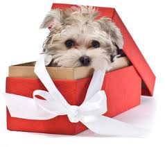do pets make gifts for the holidays