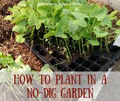 the no dig vegetable garden