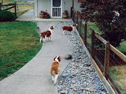 q u0026a more help for dog friendly gardens sunset