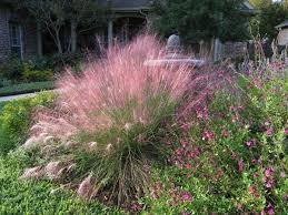 Fall Garden Plants Texas - 29 best images about texas garden ideas on pinterest gardens
