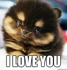 Puppy Face Meme - i love you i love you puppy meme quickmeme