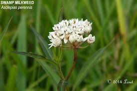 native plants of florida what florida native plant is blooming today daily photo of