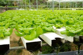hydro garden ikea launches indoor garden that can grow food all