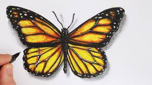 how to draw a realistic butterfly time lapse youtube