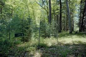 Wisconsin Forest images Deer account for almost half of long term forest change study finds jpg