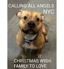Lost Dog Meme - missing pets usa home facebook