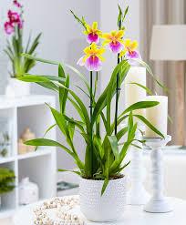 buy flowering house plants online bakker com