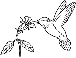 hummingbird coloring pages very detailed realistic hummingbird