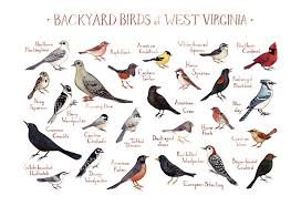 West Virginia birds images West virginia backyard birds field guide art print jpg