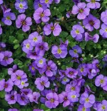rock garden perennials sun mike u0027s garden top 5 plants