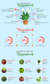 benefits of houseplants indoor plants that boost productivity in the workplace the mind