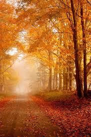 61 fall images landscapes autumn harvest