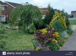 Small Shrubs For Front Yard - small shrubs and colorful perennials in border beside lawn and