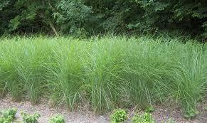 cheap outdoor carpet rolls grass ideas