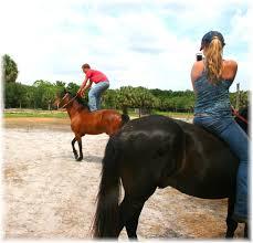 palomino horse sun city stables