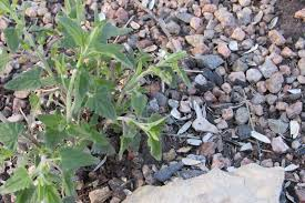 native plants of colorado blooming the second week of april perennial favorites