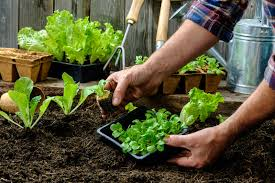What Kind Of Mulch For Vegetable Garden by Carefree Lawn Center How To Plan A Vegetable Garden Carefree