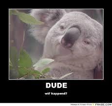 koalas meme google search funny pinterest meme