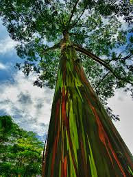 Most Beautiful Colors by 16 Of The Most Magnificent Trees In The World