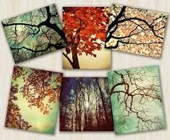 tree photography home decor nature prints autumn color idealpin