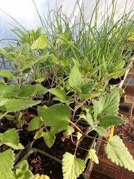 garden delights herb farm blog