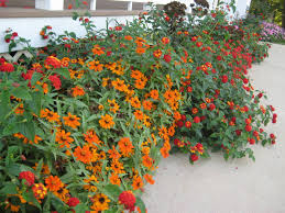 basic design principles using color in garden proven winners