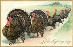 thanksgiving day row of turkeys postcard c 1907 graphics