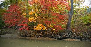 a row of fall colored trees by jacob routzahn on deviantart