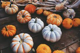 small pumpkins small pumpkins pictures photos and images for