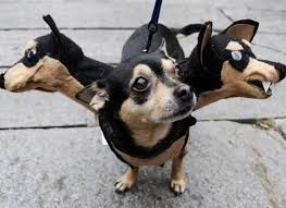 10 Scariest Halloween Costumes 25 Small Dog Costumes Ideas Wiener Dogs
