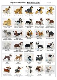 afghan hound kennel in australia tips to get your lazy dog to exercise special developmentspecial