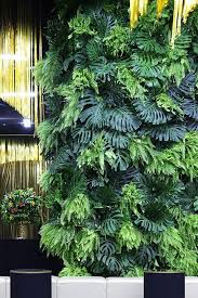 aesthetic sharer zhr on plant wall the plant and plants