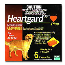 australian shepherd ivermectin is heartgard safe for collies sensitive to ivermectin is
