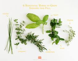 growing fresh herbs inside home design ideas