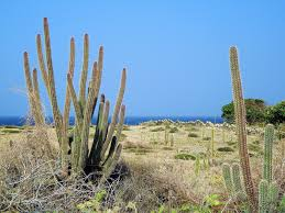 focusing on travel ancient aruba in modern times the caves at