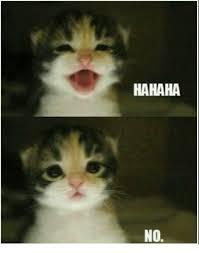Cute Cat Meme Generator - 25 best memes about cute cat meme generator cute cat meme