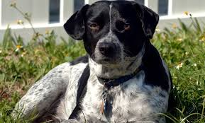 Temporary Blindness In Dogs Skunk Spray And Your Dog Vca Animal Hospital