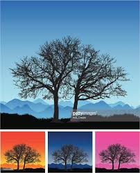 large remote beautiful winter tree silhouette vector getty