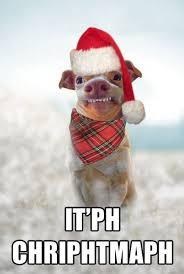 Christmas Dog Meme - 30 funny animal christmas quotes cutest cats