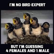 Meme Bird - im no bird expert animal meme