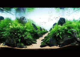 Aquascape Moss Dazzle Aquascape Aquarium With Java Moss Plant And Hairgrass Plant