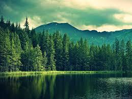 1400x1050 pine trees near mountain lake wallpaper