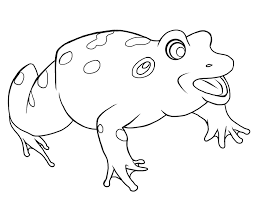 frog life cycle coloring page coloring home