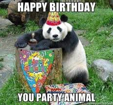 Birthday Animal Meme - you party animal funny happy birthday meme just sayin