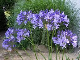 plante vivace soleil les vivaces fleurs et jardins de rhuys