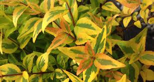 gossetts landscape nursery inc plants trees shrubs